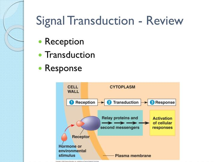 Signal Transduction - Review