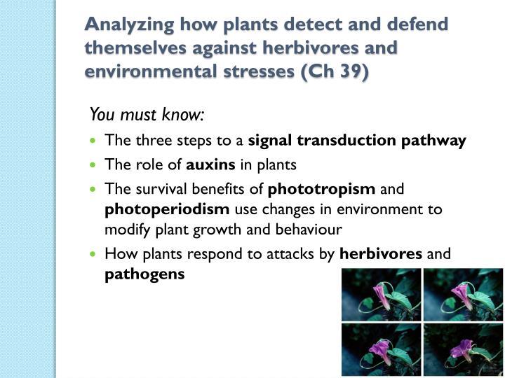 Analyzing how plants