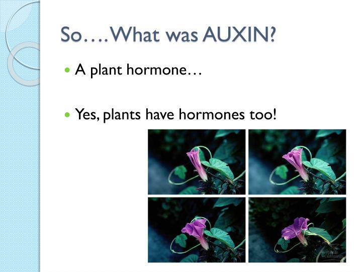 So…. What was AUXIN?