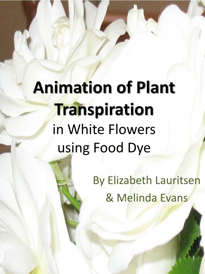 Animation of Plant Transpiration