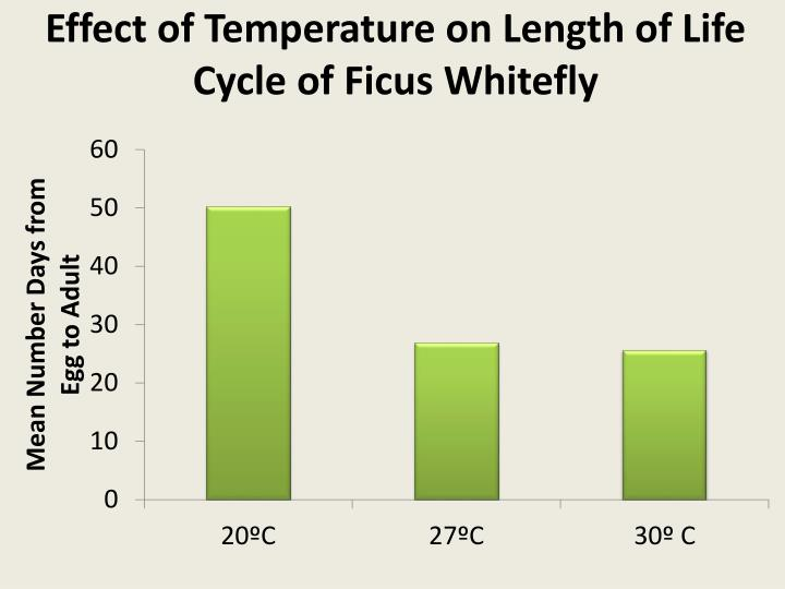 Effect of Temperature on Length of Life Cycle