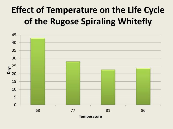 Effect of Temperature on the Life Cycle of the Rugose Spiraling Whitefly