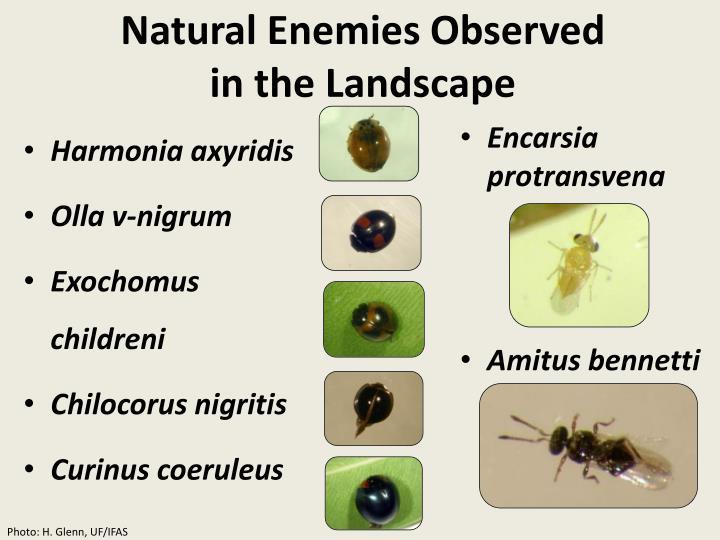 Natural Enemies Observed