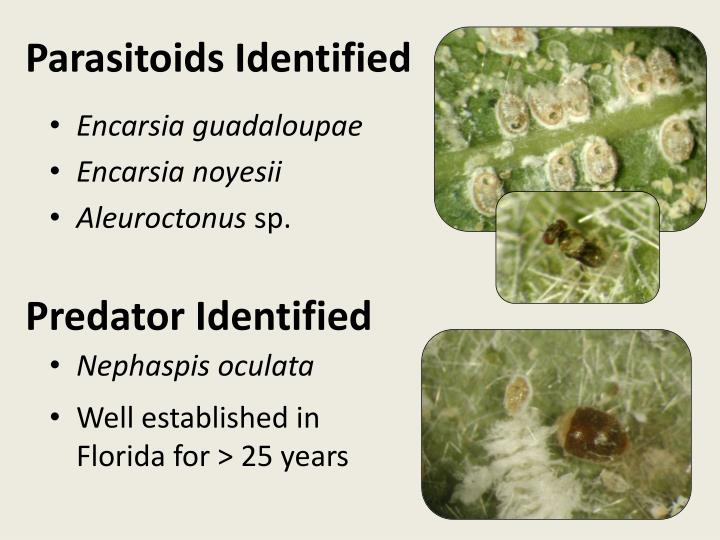Parasitoids Identified