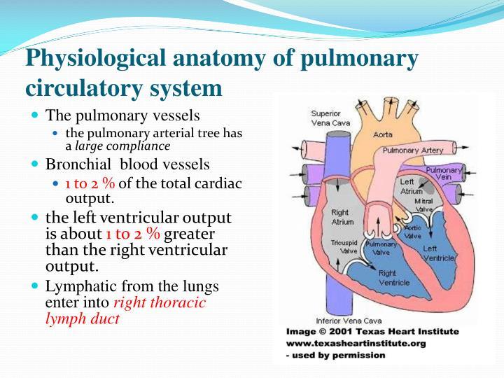 Pulmonary Circulation Anatomy
