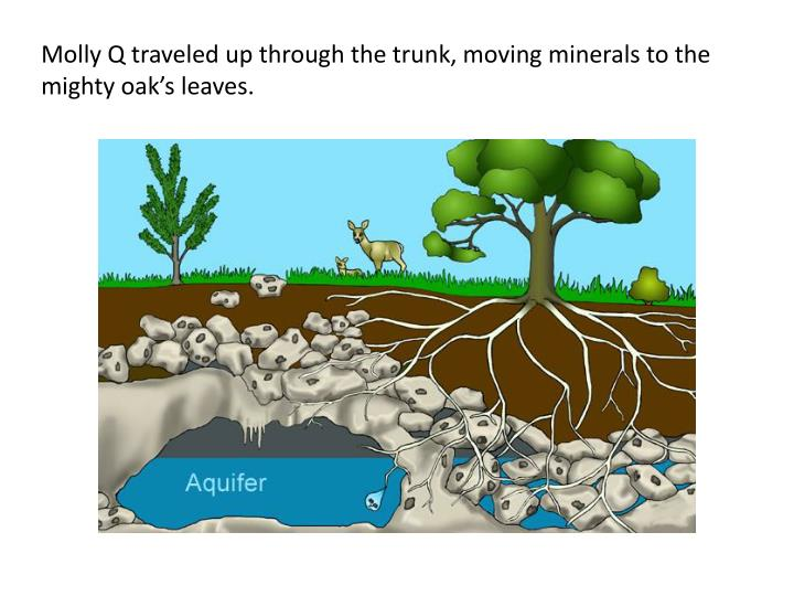 Molly Q traveled up through the trunk, moving minerals to the mighty oak's leaves.