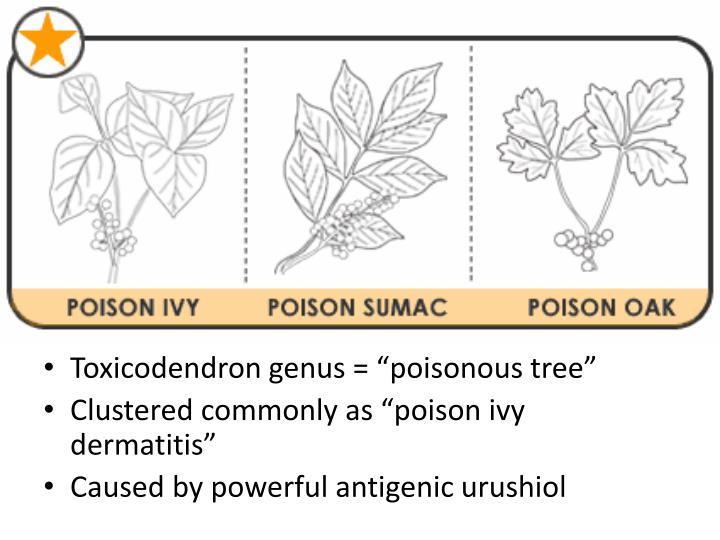 Toxicodendron