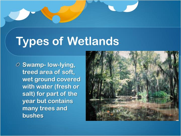 Types of Wetlands