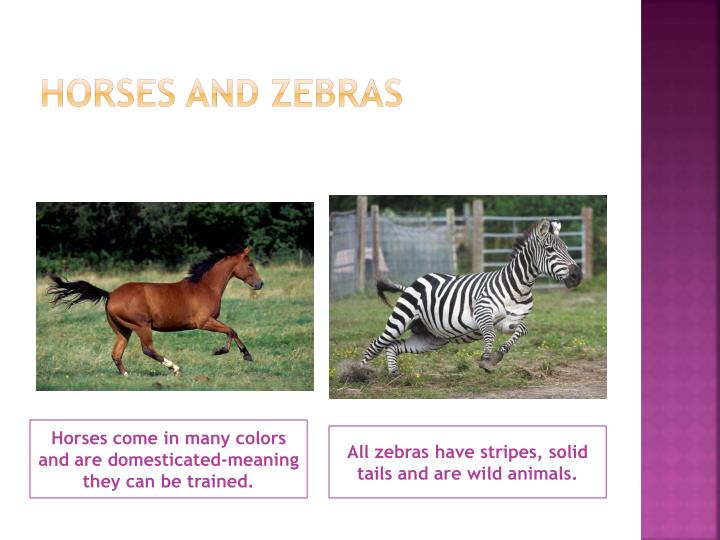 Horses and zebras
