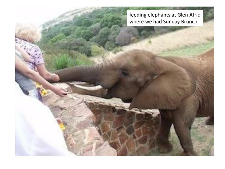 feeding elephants at Glen
