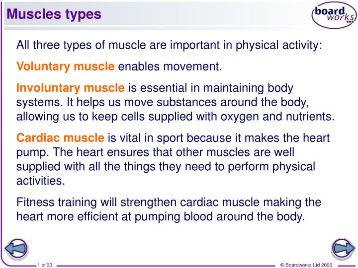 Muscles types