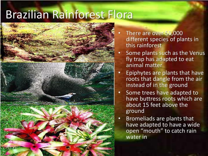 Brazilian Rainforest Flora