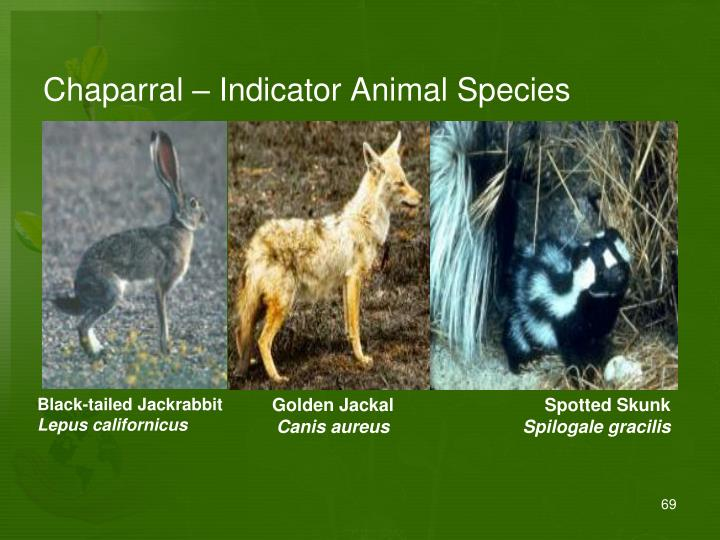 Chaparral – Indicator Animal Species