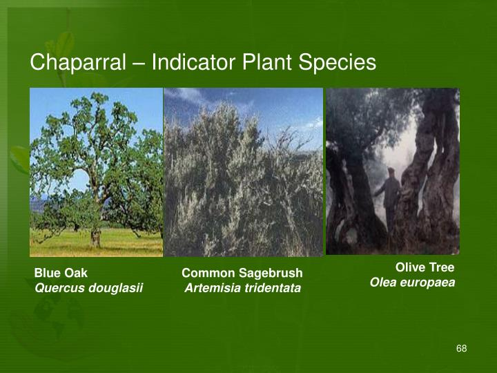 Chaparral – Indicator Plant Species