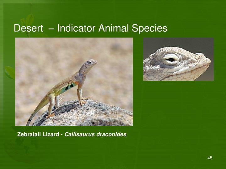 Desert  – Indicator Animal Species