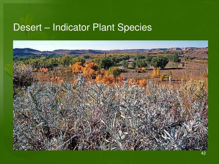 Desert – Indicator Plant Species