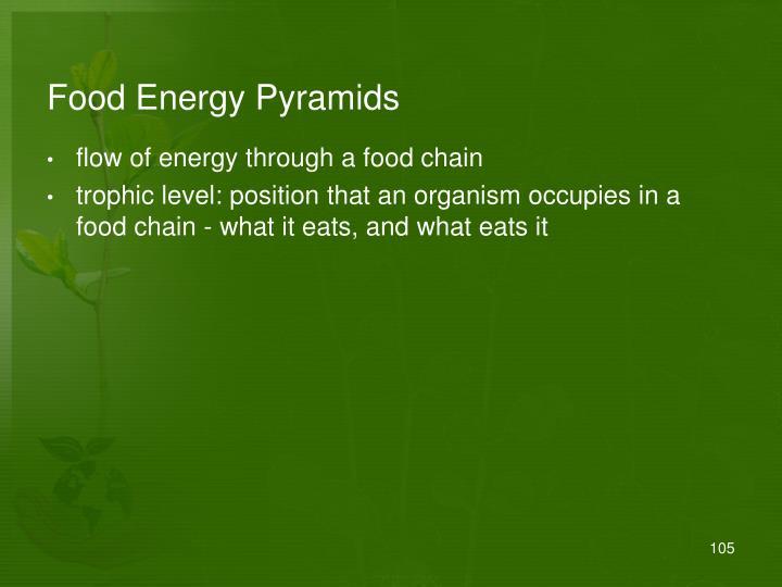 Food Energy Pyramids