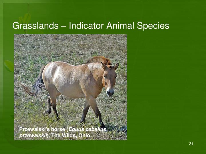 Grasslands – Indicator Animal Species