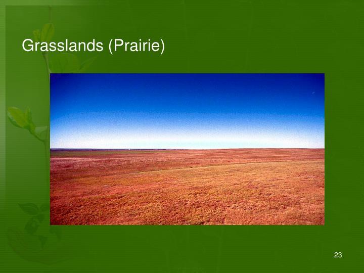 Grasslands (Prairie)