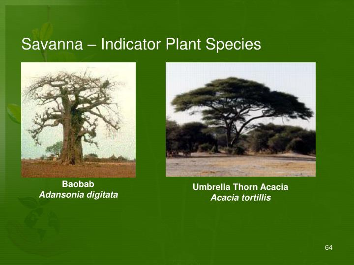 Savanna – Indicator Plant Species