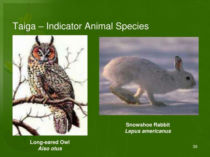 Taiga – Indicator Animal Species