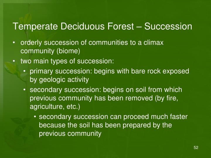 Temperate Deciduous Forest – Succession