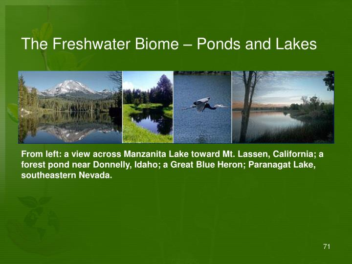 The Freshwater Biome – Ponds and Lakes
