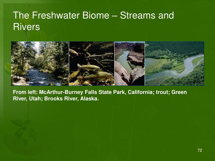 The Freshwater Biome – Streams and Rivers