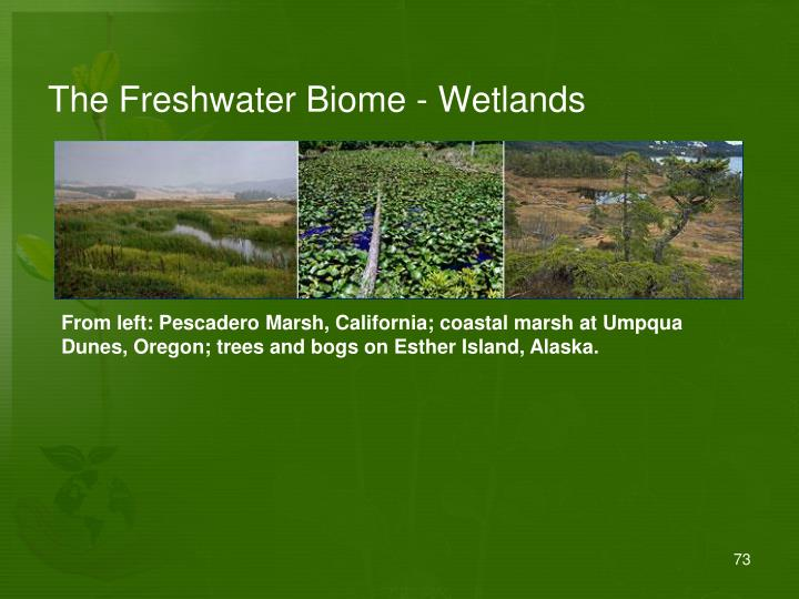 The Freshwater Biome - Wetlands