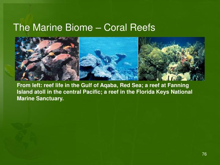 The Marine Biome – Coral Reefs