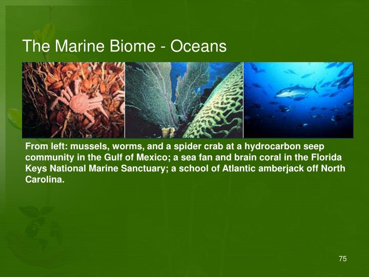 The Marine Biome - Oceans
