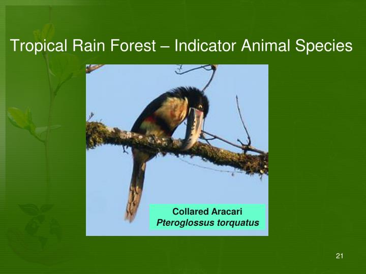 Tropical Rain Forest – Indicator Animal Species
