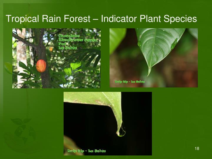 Tropical Rain Forest – Indicator Plant Species