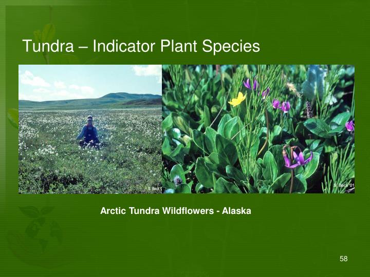 Tundra – Indicator Plant Species