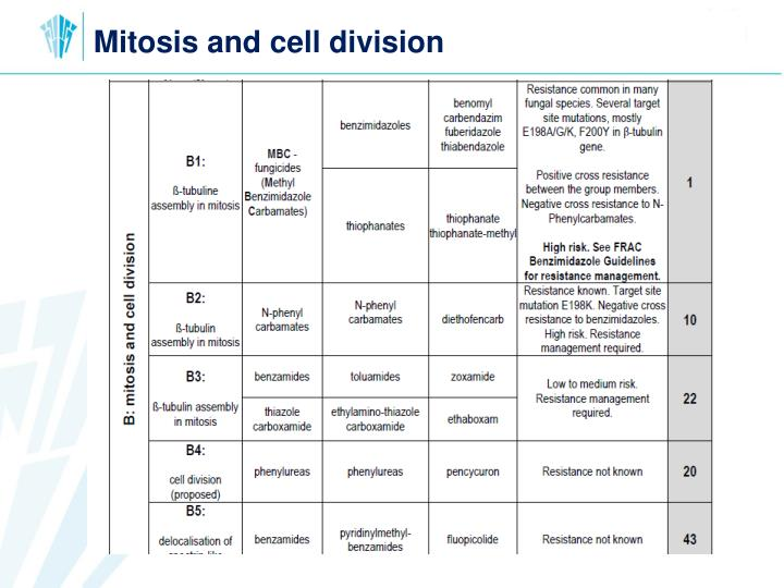 Mitosis and cell division