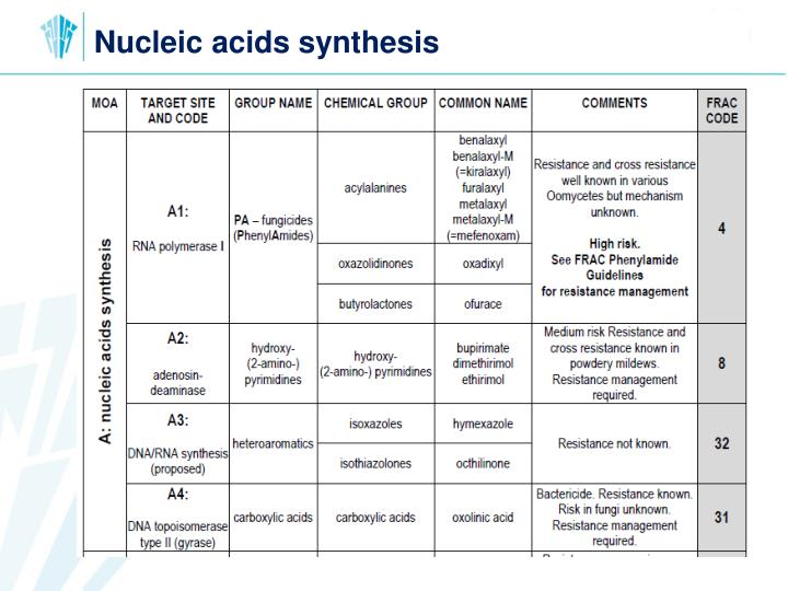 Nucleic acids synthesis