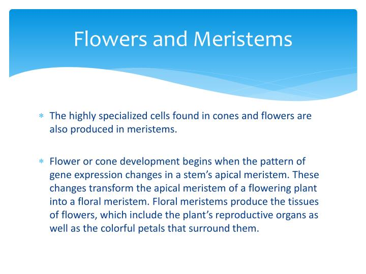 Flowers and Meristems