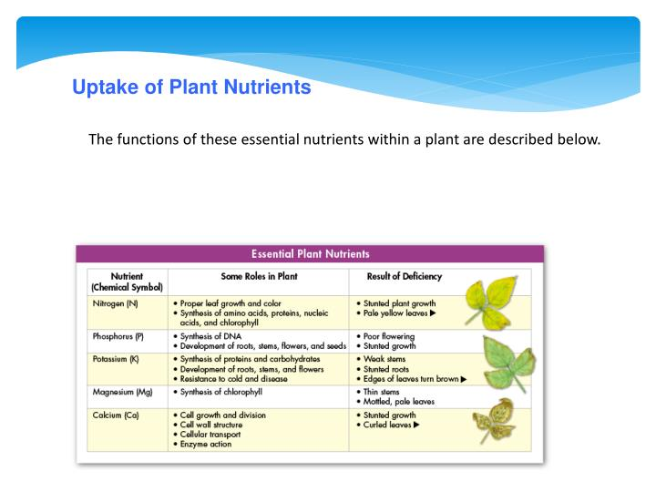Uptake of Plant Nutrients