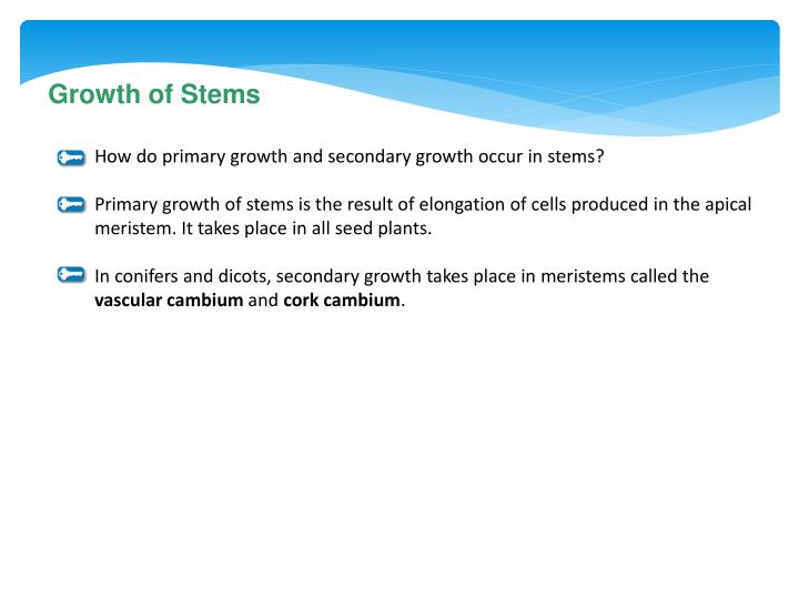 Growth of Stems