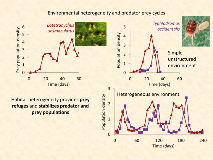 Environmental heterogeneity and predator prey cycles