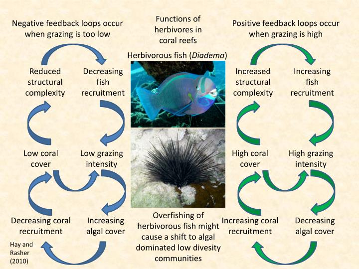Functions of herbivores in coral reefs