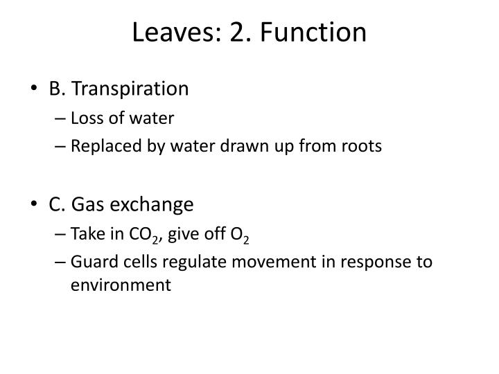 Leaves: 2. Function