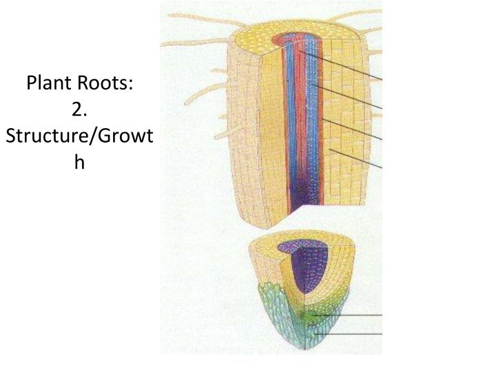 Plant Roots: