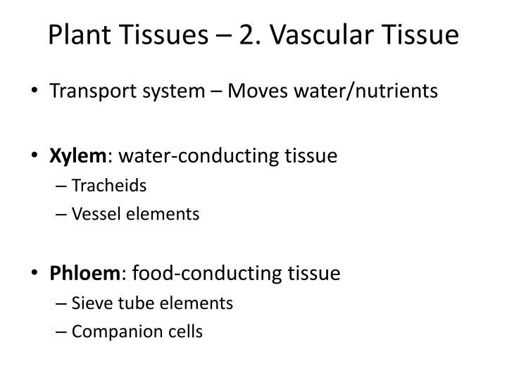 Plant Tissues – 2. Vascular Tissue
