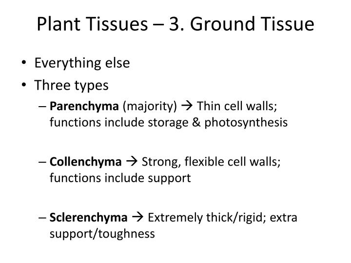 Plant Tissues – 3. Ground Tissue