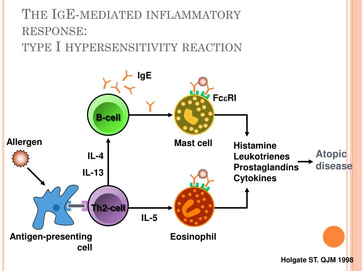 The IgE-mediated inflammatory response: