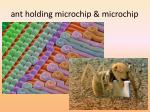 ant holding microchip microchip
