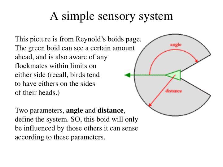A simple sensory system