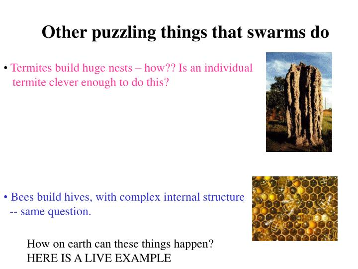Other puzzling things that swarms do