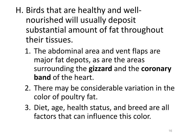 Birds that are healthy and well-nourished will usually deposit substantial amount of fat throughout their tissues.